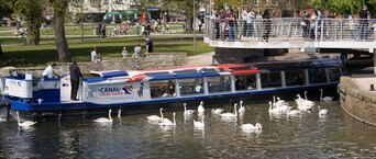boat trip and swans